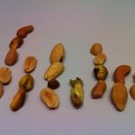 Statistik med jordnötter